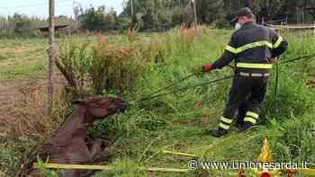 Santa Giusta, cavallo di razza cade in un fossato: intervengono i vigili del fuoco - L'Unione Sarda.it - L'Unione Sarda