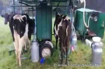 Desesperados, así están los productores de leche de Guachetá, Cundinamarca - Noticias Día a Día