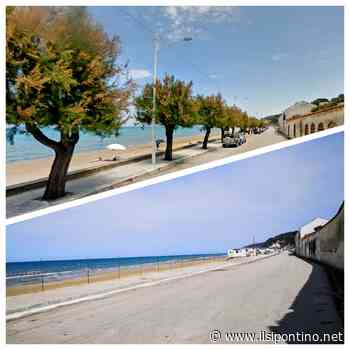 Alberi abbattuti a San Menaio (Vico del Gargano). La video denuncia del WWF di Foggia - ilsipontino.net