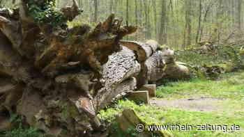 Diagnose und Prognose für Forst in Bad Neuenahr-Ahrweiler: Was der Experte herausfand - Rhein-Zeitung
