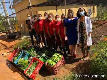 Unidade prisional feminina de Cachoeiro de Itapemirim doa hortaliças para lar de idosos - Defesa - Agência de Notícias
