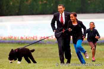 Obama dog Bo, once a White House celebrity, dies from cancer - OrilliaMatters