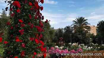 Las rosas lucen en Sant Feliu de Llobregat - La Vanguardia