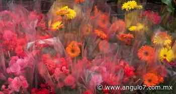 Rosas y más flores, garantizadas para 10 de Mayo: Sader - Ángulo 7