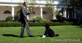 Heartbroken former US president Barack Obama's family dog Bo tragically dies