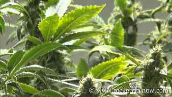 Medical marijuana in Alabama? It's just one signature away. - WZDX