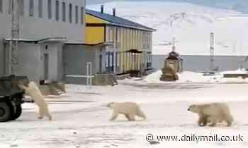 Polar bear clings to moving truck filled with thrown-out food in Russia - Daily Mail