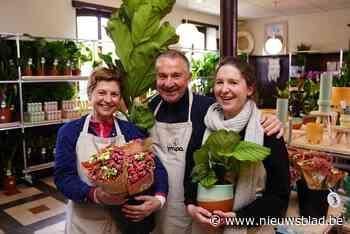 Op zoek naar een Gents plantje? Lokale plantenbeurs kampeert tien dagen in Meulestede - Het Nieuwsblad