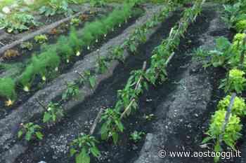 Donare il surplus di orti e frutteti: a Gressan iniziativa di solidarietà - Aosta Oggi