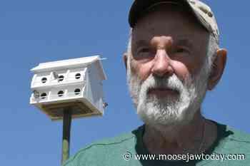 Moose Jaw Wildlife Federation installs new birdhouse in Spring Creek - moosejawtoday.com