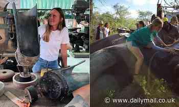 Australian vet working to fit prosthetic legs to elephants on the Thailand-Myanmar border