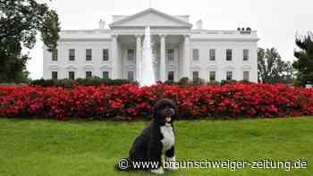 """Haustier: Ex-""""First Dog"""": Obamas Hund Bo ist an Krebs gestorben"""
