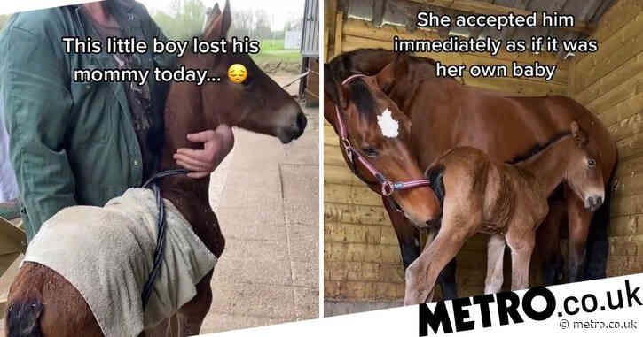 Heartbroken horse adopts malnourished foal after her stillborn birth