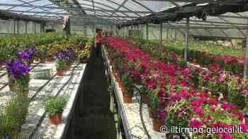 L'Agrario di Soliera vende piante e fiori di sua produzione - Il Tirreno