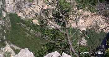 Palermo, si stacca costone roccioso da Monte Pellegrino: paura tra i residenti - La Sicilia