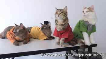 Trend in Malaysia: Katzen-Outfits zum Ramadan