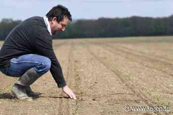 Quand les corbeaux sèment la destruction dans les champs du Loiret - La République du Centre