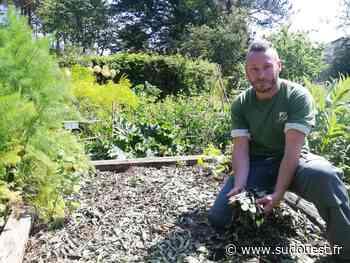 Saint-Jean-de-Luz : les bons conseils du jardin botanique pour faire du zéro phyto chez soi - Sud Ouest