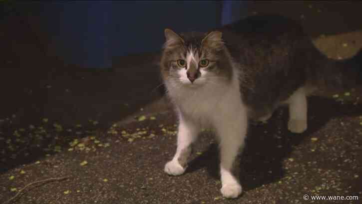 Meet the cats fighting Chicago's rat problem