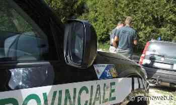 San Bonifacio, a caccia in auto senza licenza, in luoghi e tempi vietati - PrimoWeb