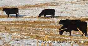 Controlling Feed Loss, Spoilage Important for Cattle Production