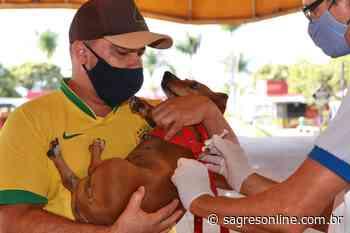 Senador Canedo inicia vacinação contra a raiva animal - Sagres Online - Sagres Online