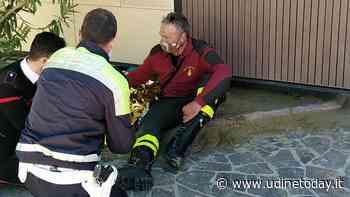 Impaurito e ferito: piccolo capriolo entra in mare a Lignano Sabbiadoro - UdineToday
