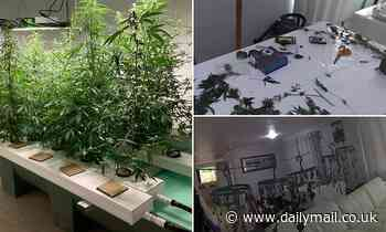 Police capture moment they discover cannabis plants in a Townsville house