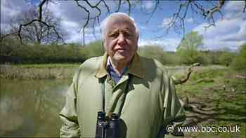 Sir David Attenborough: Problems that await greater than the epidemic