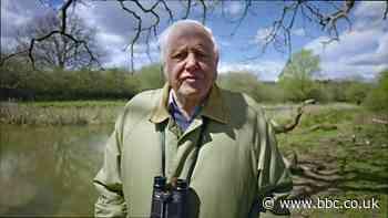 Sir David Attenborough: Problems that await greater than the epidemic