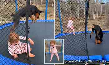 Three-year-old girl and her Rottweiler best buddy leap around on a trampoline in adorable footage