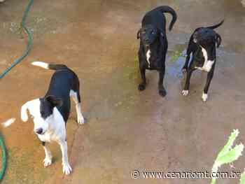 Lucas do Rio Verde: Protetora independente pede ajuda para tratamento de animais - CenárioMT