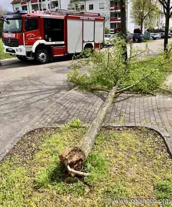 ▷ Einsatz #58: Windbruch - umgestürzter Baum - Eppingen.org