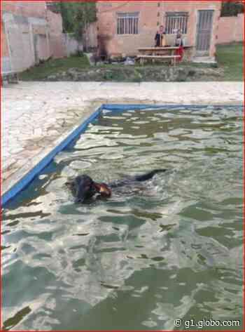 Vaca cai dentro de piscina em Esmeraldas, na Grande BH - G1