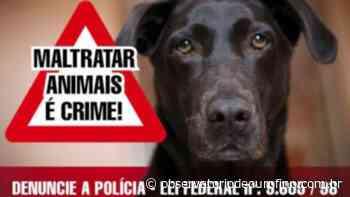 Abandono de animais é crime – Homem é preso em Ouro Fino por abandonar cães - Observatório de Ouro Fino