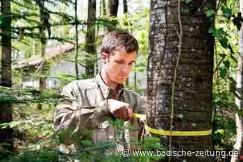 In den Wäldern werden gerade Daten gesammelt – auch im Landkreis - Ehrenkirchen - Badische Zeitung