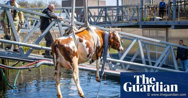 Animals farmed: Foie gras backlash, the 'toughest job in farming' and salmonella outbreaks