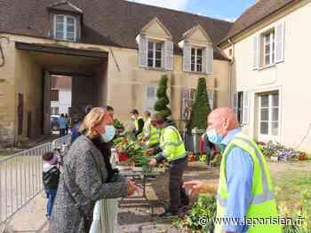 Bonneuil-sur-Marne : des fleurs gratuites pour embellir la ville et limiter le gaspillage - Le Parisien