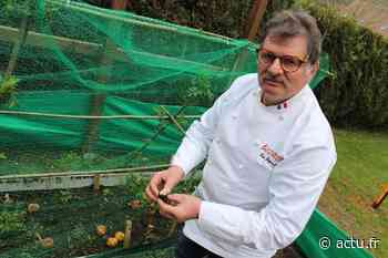 Eure. À Saint-Aubin-sur-Gaillon, ce cuisinier fait pousser les morilles avec une recette oubliée - actu.fr