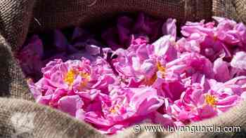 Rosas antiedad, el poder cosmético de la reina de las fragancias - La Vanguardia