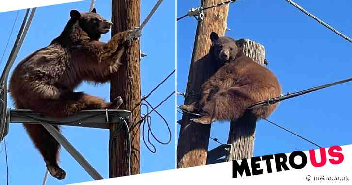 Border Patrol responds to bear by US-Mexico border