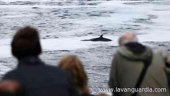 Rescatan a una ballena varada en el río Támesis - La Vanguardia