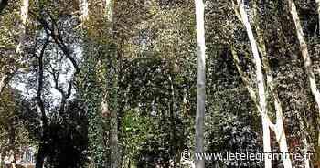 Dinard : plusieurs arbres vont être abattus par sécurité - Le Télégramme