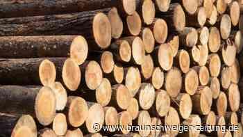 Unterschätzter Rohstoff: Der weltweite Kampf ums deutsche Holz