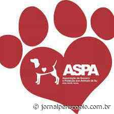 Comentários sobre: Pandemia causa aumento de abandono de animais em Itu - Jornal Periscópio