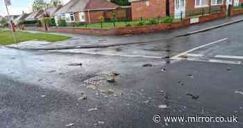 Street littered in 'huge' dead rats and nappies after storm causes flooding