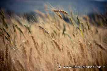 Siena Food Lab: aperto il bando per 20 aziende cerealicole - Il Cittadino on line