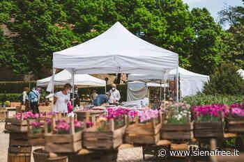 A Siena la ''Mostra mercato di piante e fiori'' - FOTOGALLERY - SienaFree.it
