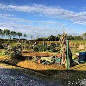 Centomila orti per una Pontedera più verde, giovane ed inclusiva - VTrend