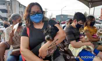 Realizan en General Escobedo macro brigada de esterilización para mascotas - Notired Nuevo Leon